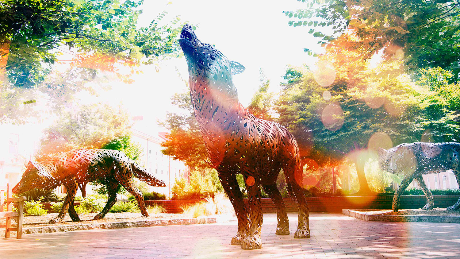 Copper wolves on NC State's campus