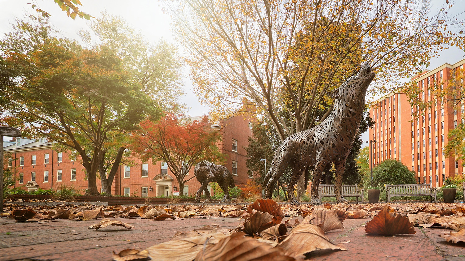 Students enjoy a fall day by the copper wolves in Wolf Plaza on main campus.